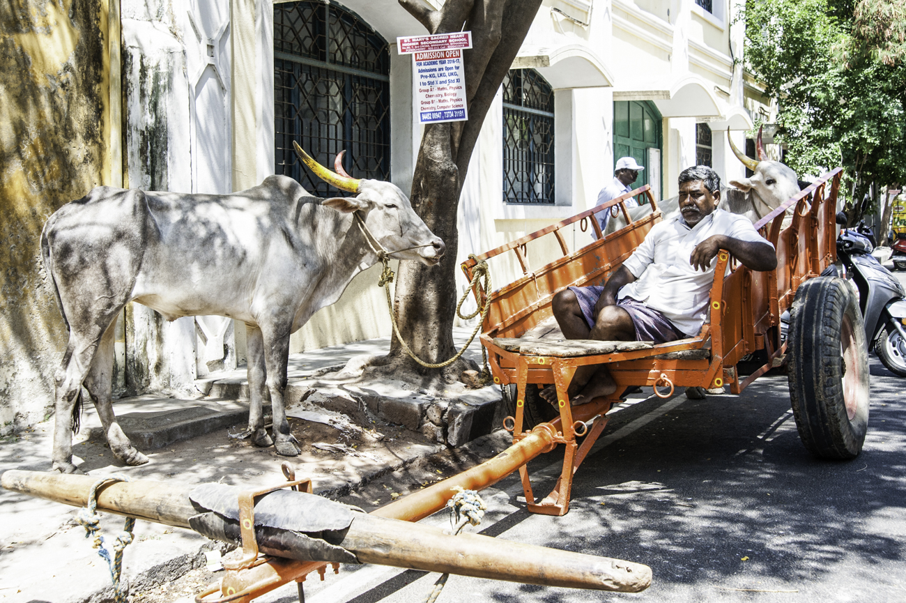 Acteur ou simple paysan? Il est parfois difficile de faire la différence entre les plateaux de cinéma et la vie indienne tant ce pays offre de bons sujets photographique!